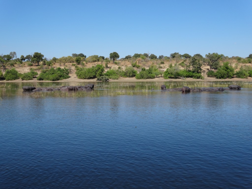 The Botswana shoreline as seen from the Chobe River.