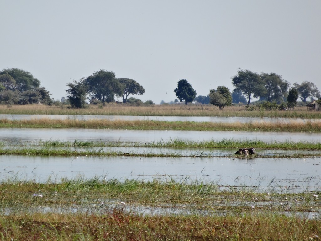 Wetlands of the Chobe River area.